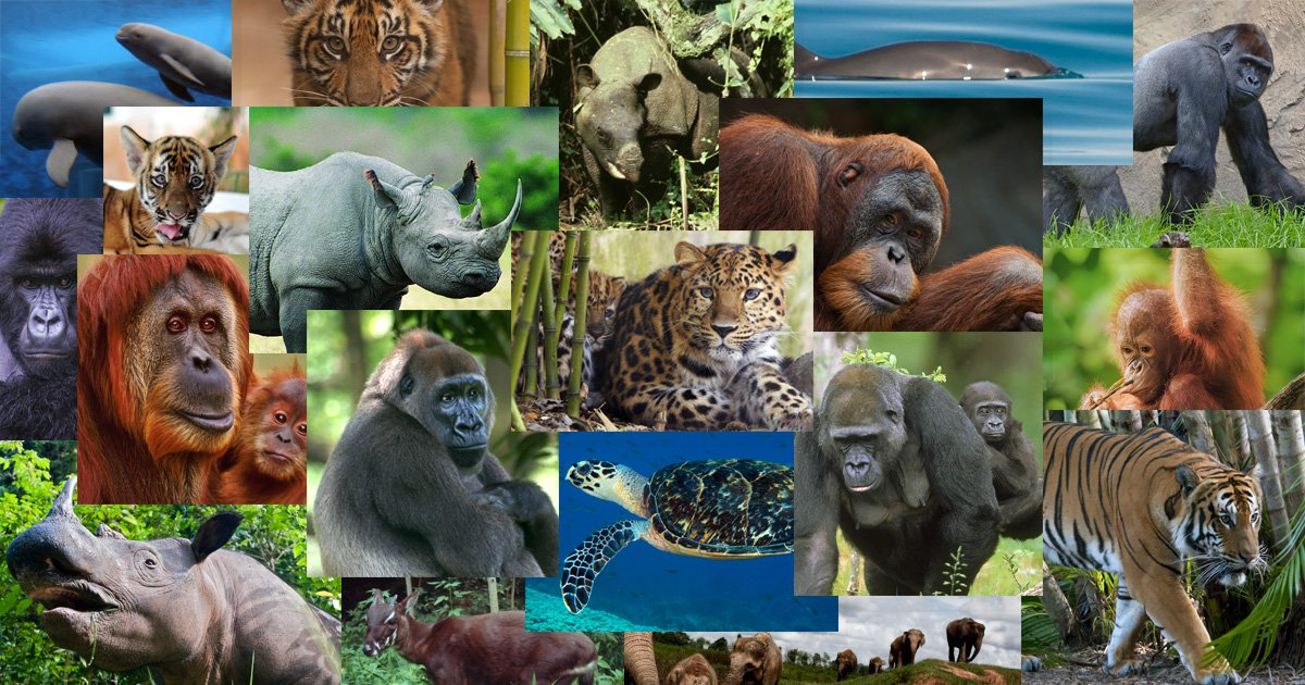 Humanity Has Wiped Out 60% of Animal Populations Since 1970