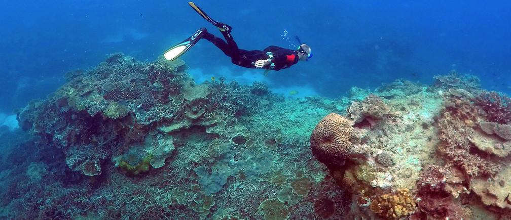 After 13 Years of Research, Scientists Know How to Save the World's Coral Reefs