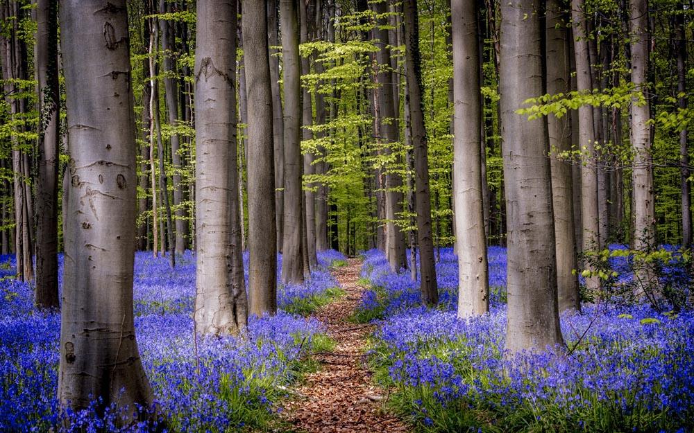 Forest Transition or Landscape Turnaround