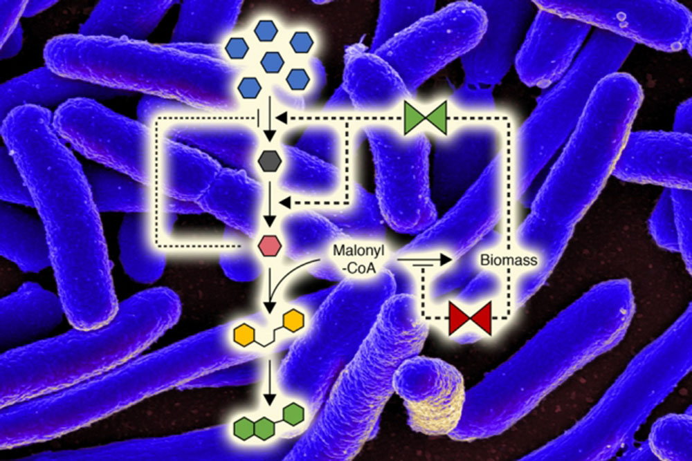 A New Way to Control Microbial Metabolism