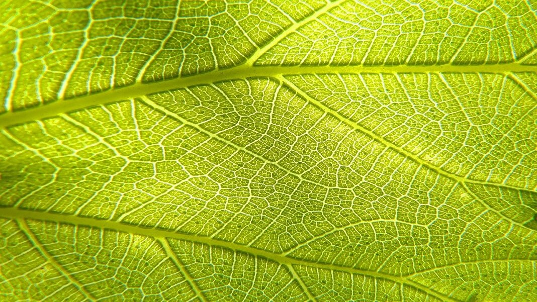 Hacking Plant Life: Artificial Photosynthesis Takes a Leap Forward