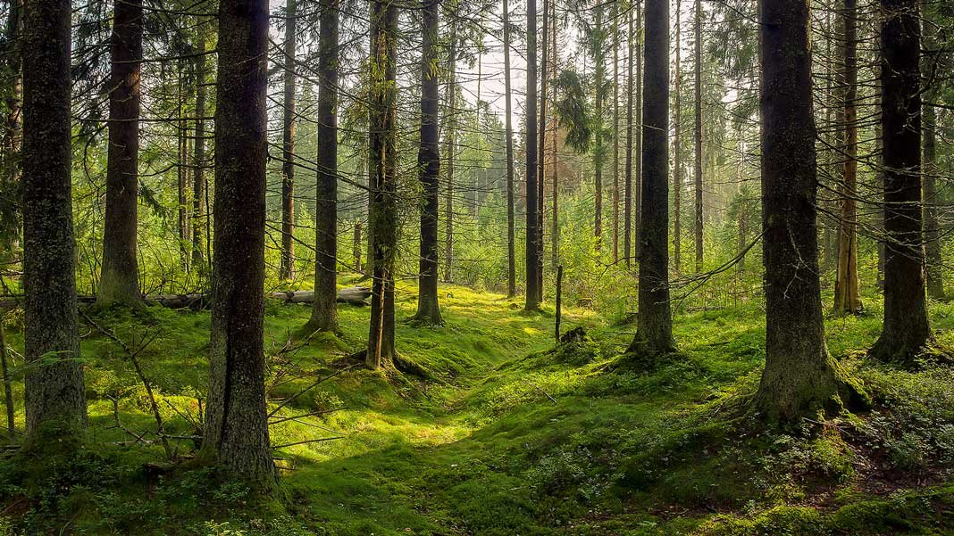 How Tech Can Help Curb Emissions by Planting 500 Billion New Trees