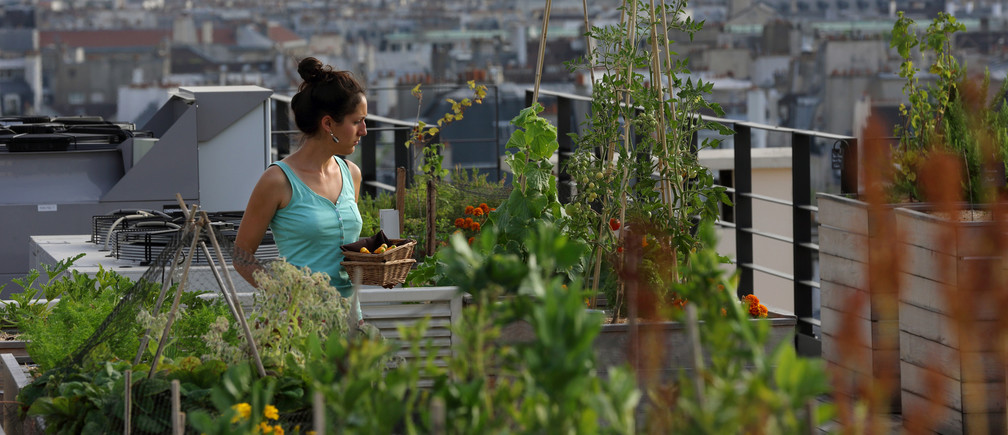 Why More Cities Should Adopt Green Roofs