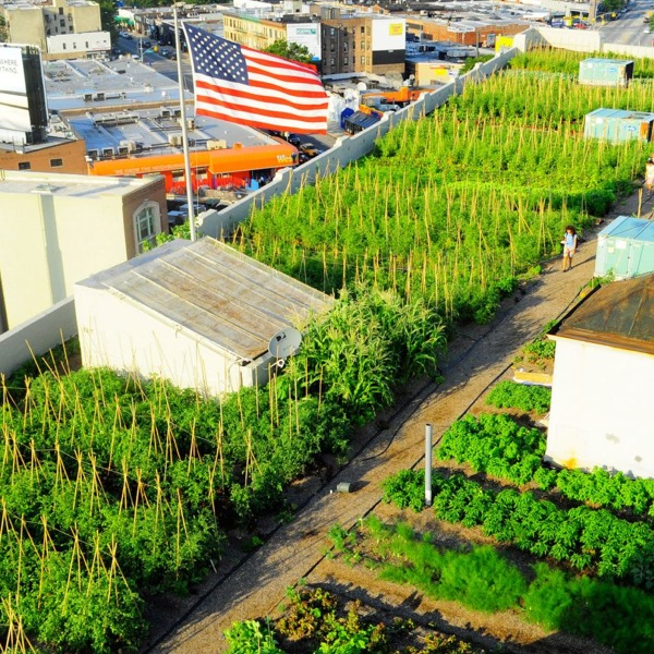 New Yorks Rooftop Farms Orovide Fresh Local Produce - and Help Stop a Sewage Problem