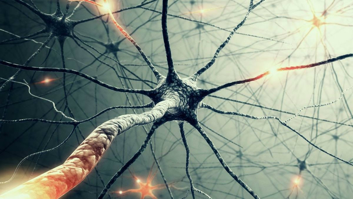 Our Brains May be 100 Times More Powerful Than We Thought