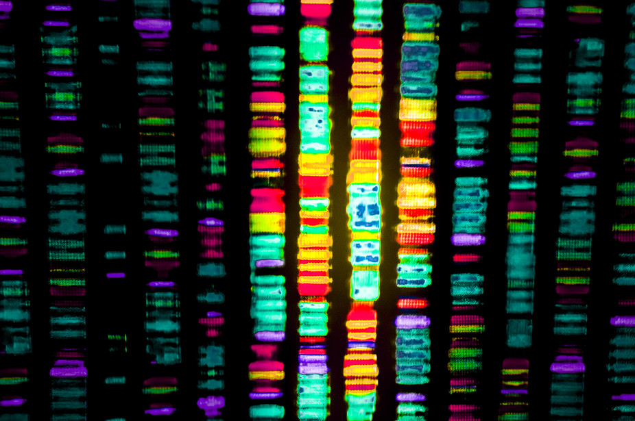 Safety First With Gene Editing