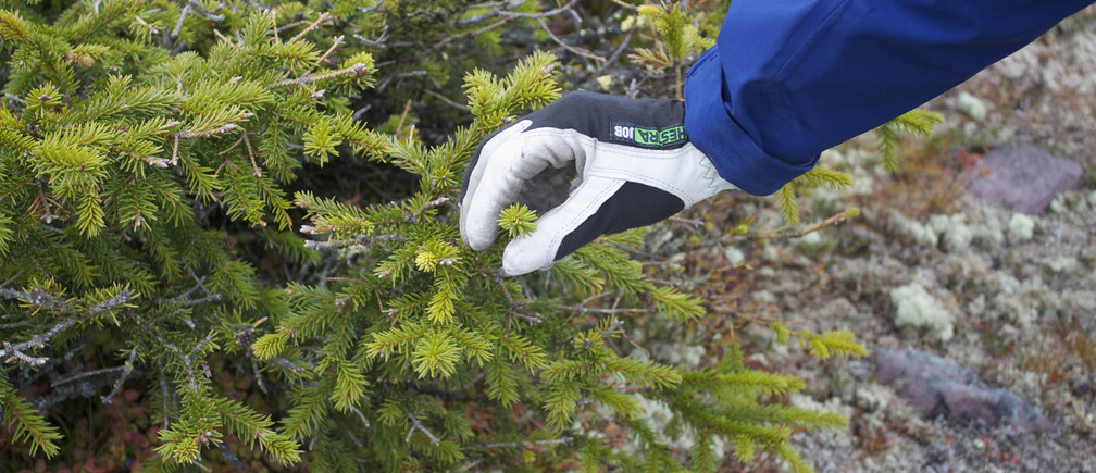 Scientists in Sweden are Studying the Climate-Cooling Effects of Spruce Forests